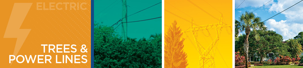 Trees & Power Lines