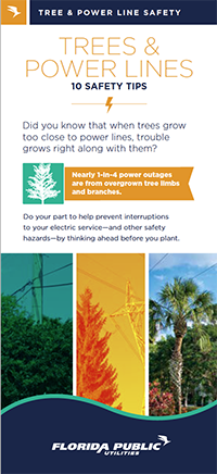 Trees & Power Lines 10 Safety Tips